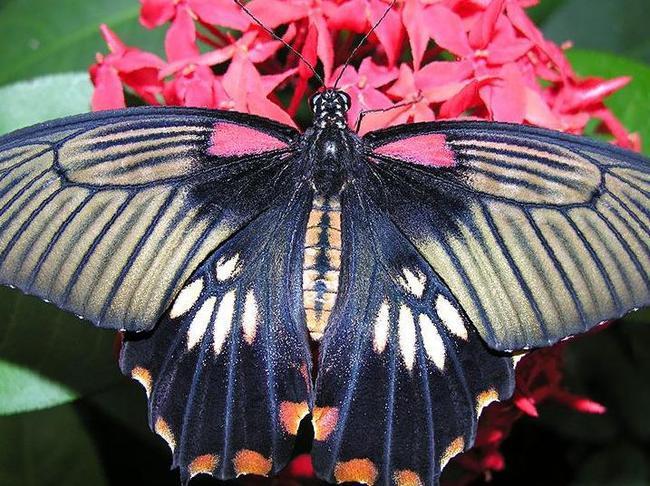 Бабочки в подарок тамбов 58