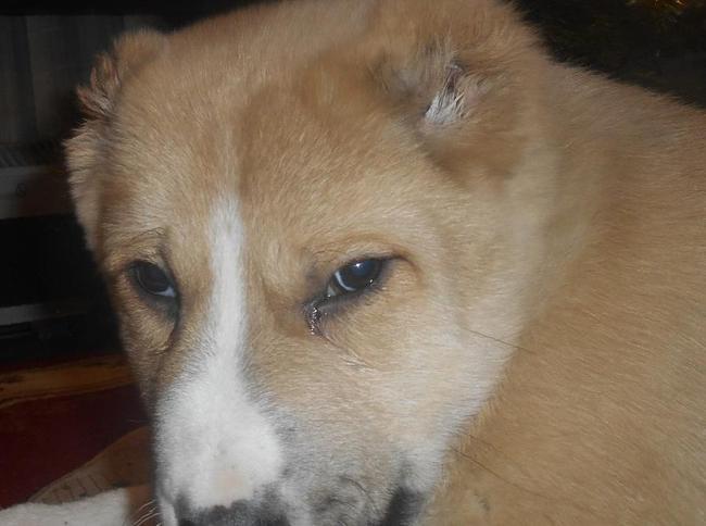 работы Социальная продажа собак алабаев ростовская область событий: отрывках